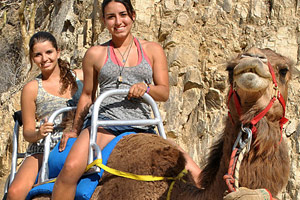 Camel Quest in Los Cabos