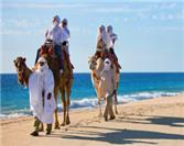 Camel Adventures in Los Cabos