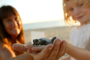 Sea turtle release in Los Cabos