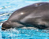 Dolphins in the Wild in Vallarta - A Fascinating Experience