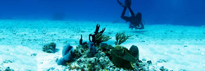 Cozumel Vacations
