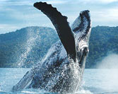 The Amazing Los Cabos Whale Show