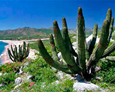Cabo Pulmo National Park: Natural Beauty in Los Cabos