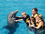 Swimming with dolphins in Vallarta