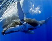 Long Live the New Los Cabos Whale Festival!