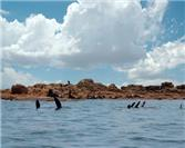 Swimming with Sea Lions on Isla Espiritu Santo