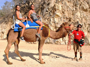 Tour through Los Cabos in Camels