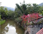 Cuale River Island, a Hidden Peaceful Paradise in Puerto Vallarta