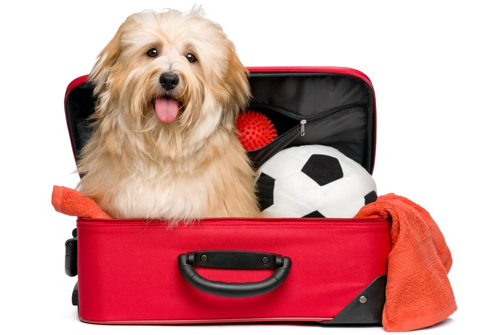 Recomendaciones para viajar con perro