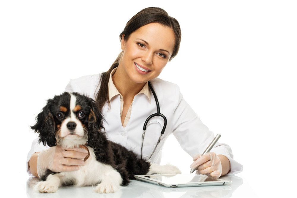 Before traveling, visit the veterinary
