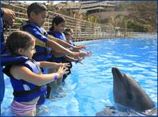Dolphin Kids Cabo Dolphins Tour