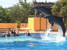 Tour Dolphin Connection|NIÑOS GRATIS