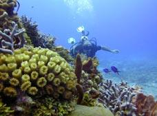 Learn Scuba Diving with