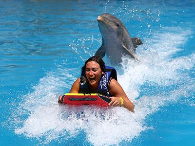Dolphin Swim Adventure Puerto Vallarta Tour