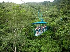 Rainforest Cable Car Tour