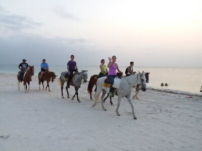 Horseback Riding Tour Through Punta Coco and Punta Ciricote