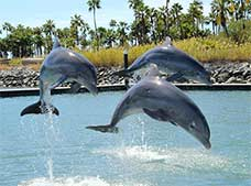Tour Dolphin Encounter Los Cabos Dolphin Discovery