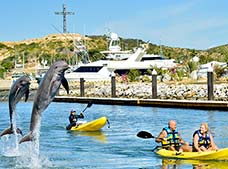 Tour Dolphin Royal Swim Los Cabos