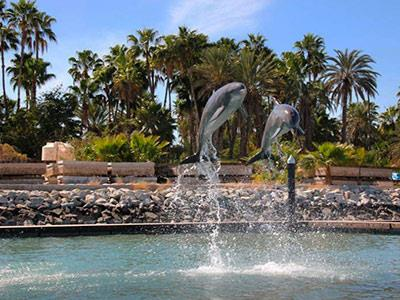 Dolphin Discovery Dolphin Swim and Ride Tour Los Cabos