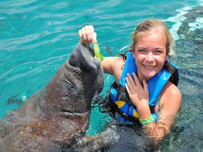 Manatee Encounter in Isla Mujeres Tour