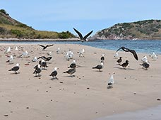 Island Adventure Pajaros Tour