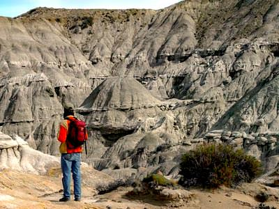 Petrified Forest Tour