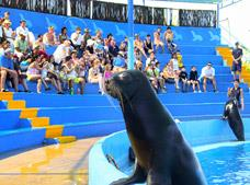 Tour Sea Lion Discovery Vallarta, Dolphin Discovery