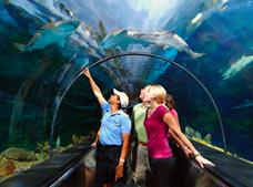 SeaWorld Parks Florida | Promotion