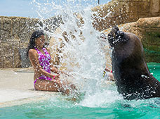 Sea Lion Encounter Tour