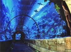 Shark Reef Aquarium Tour