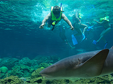 Sharks Encounter Tour