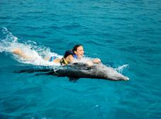 Tour Dolphin Swim Adventure Punta Cana