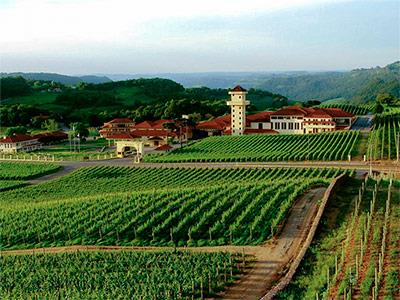 Grape and Wine Tour with Train plus Italian Epic Admission