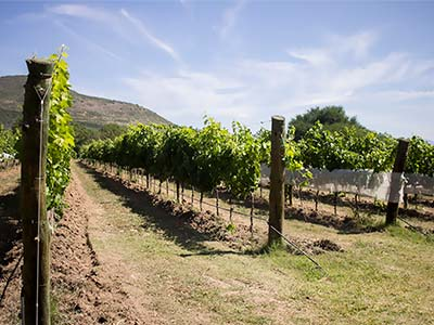 Tour Vineyard in Queretaro and  Bernal Peak from Mexico City
