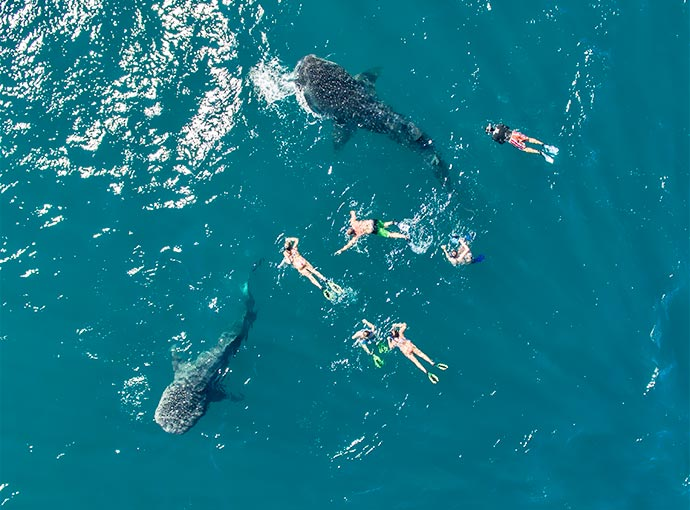 Swimming with Whale Sharks SunRider Tour